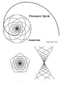 Fibonaci-Spirale